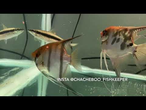 een-van-mijn-aquaria