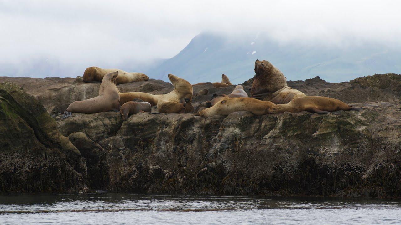 10 Endangered Ocean Species and Marine Animals
