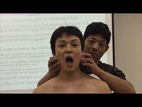 Cranial driven TMJ for mouth opening task