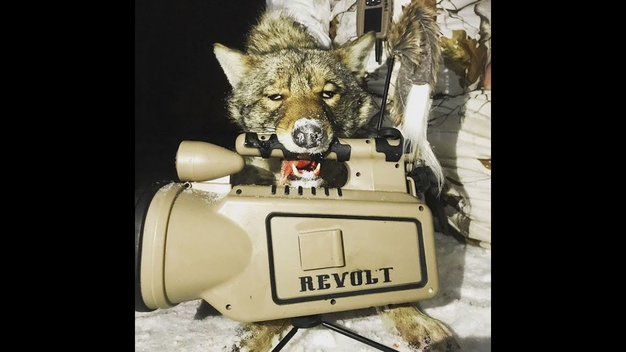 Coyote Hunting Tips and Tactics - HuntingVideosHub com