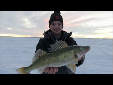 Devils Lake Multispecies: Perch, Walleye, Pike, Bass (BIG WALLEYE)