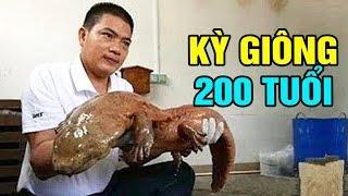 Bă't Được Kỳ Giông Khổng Lồ 200 Tuổi Trong Hang Động Ở Trung Quốc - TIN TỨC 24H TV