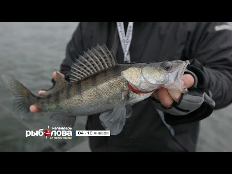 прогноз клева рыбы на канале трофей