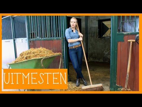 Stal uitmesten | PaardenpraatTV