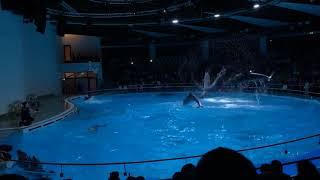 Клайпеда, шоу дельфинов