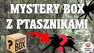 MysteryBox Ptaszniki #1: OPŁACA SIĘ CZY NIE ? SpidersForge (dla zaawansowanych za 30 złotych).