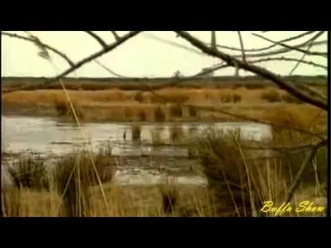 Richard Clayderman - Sleepy Shores