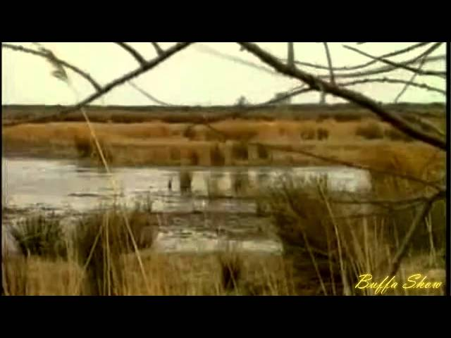 richard-clayderman-sleepy-shores-moustafa-muhammad
