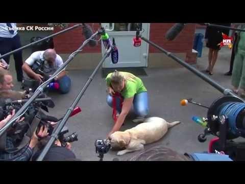 Украденная в Москве  собака-поводырь нашлась