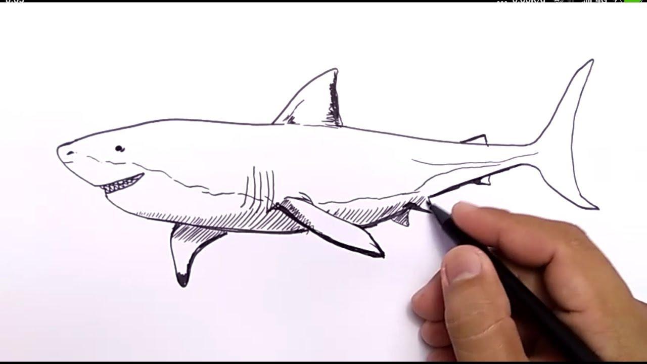 WOW,GILA, cara menggambar ikan HIU dengan MUDAH / how to draw ...