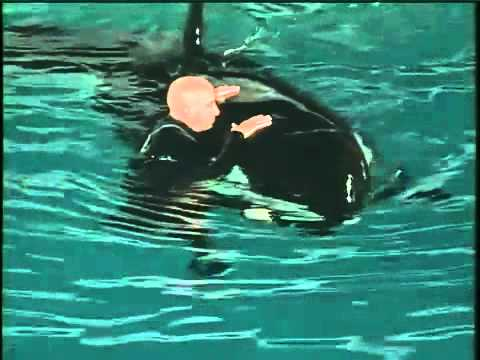 SEAWORLD TRAINER NARROWLY ESCAPE DEATH FROM KILLER WHALE