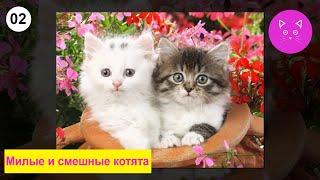 Милые  и смешные котята, кошечки и коты.