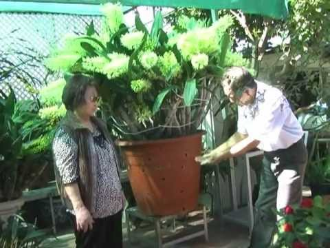 Vườn Lan của chị Minh Yến
