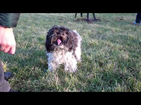 Bolonka Zvetna - 'Aus meinem Hundeleben' Teil 2