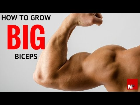 How to grow big biceps