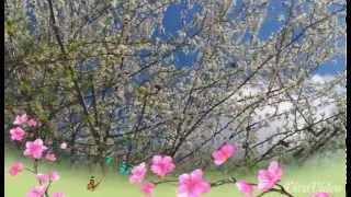Benvenuta Primavera 🌷💕