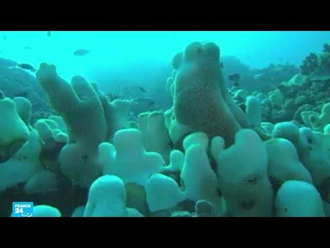 -مذبحة كارثية- للشعاب المرجانية قبالة أستراليا  - نشر قبل 19 دقيقة