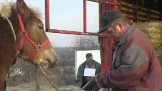 Pferdemarkt Skaryszew 2011