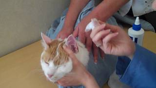 How to Clean a Cat