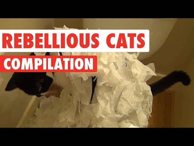 Rebellious Cats Video Compilation 2016