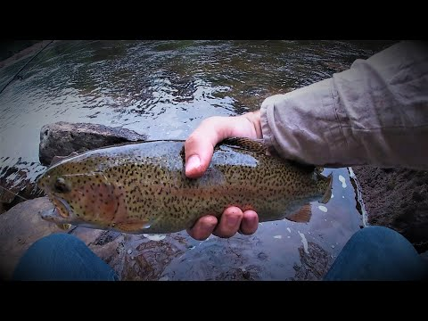 West Virginia Trout Fishing- WORMS Catch BIG RAINBOWS!!!- Part 1