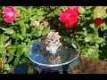 Gypsies Rings - Gypsy Bohemian Antique Rose Gold Statement Ring w CZ Crystal Paved Enamel Rose