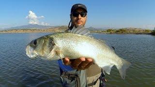 Eğlenceli Bir Levrek Avı Yarışması / Top Water Seabass Fishing Challenge