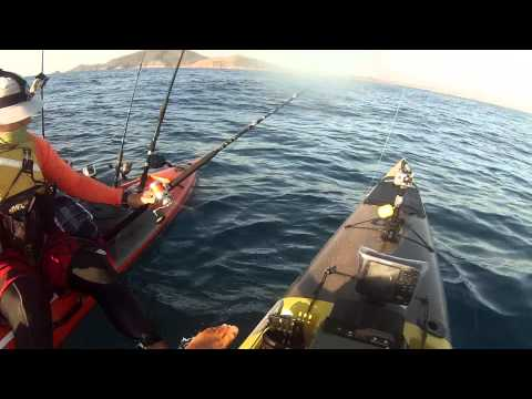 South West Rocks Fishing Action