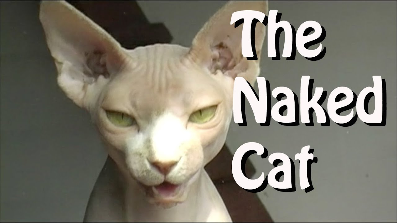 Sphynx - The Naked Cat