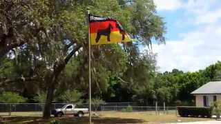 Maximilian Schnauzer Flag Blowing In The Wind