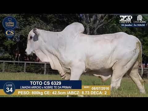 LOTE 34