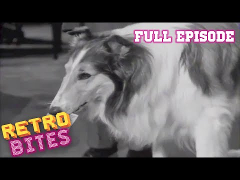 Lassie  The Raffle  Full Episodes  🐕