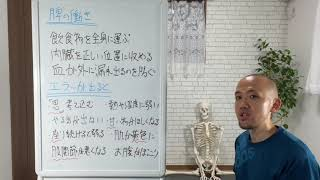経絡ストレッチ「脾」(部分カット)