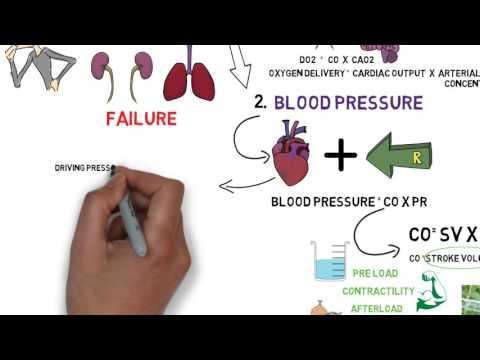 circulatory shock: part 1