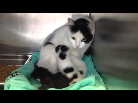 Cat Reunites with Lost Kittens!