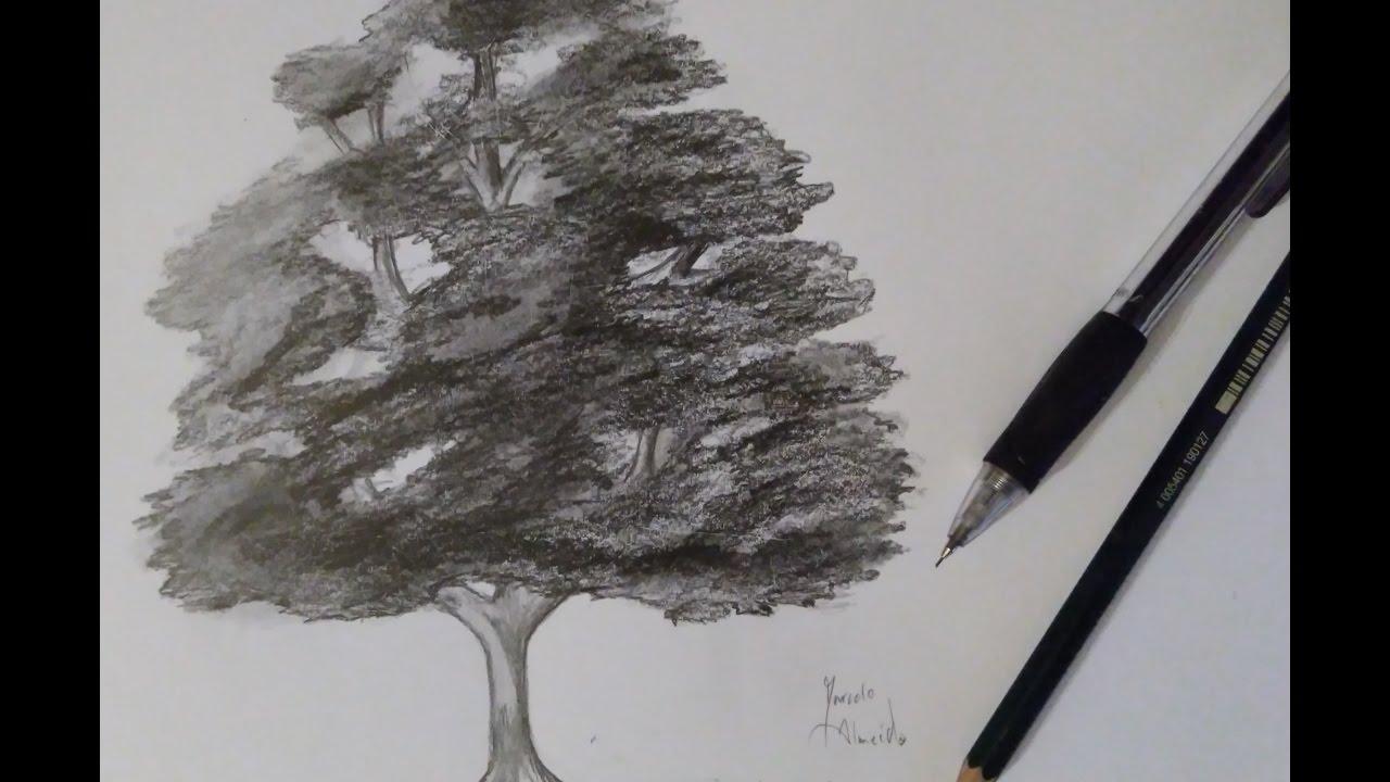 Como Desenhar Uma árvore Realista Passo A Passo Youtube