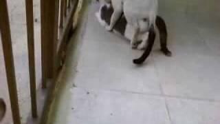 gato haciendo el amor