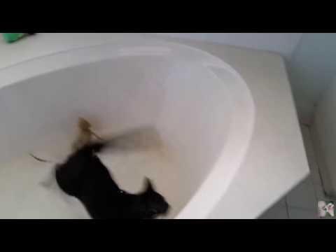 Завалился к тетке в ванну фото 626-869