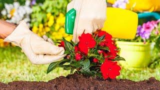 cómo eliminar las plagas en las plantas decogarden