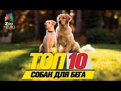 Топ 10 собак для бега\ Top 10 running dogs