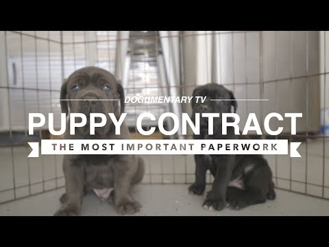PUPPY CONTRACTS: THE MOST IMPORTANT PAPERWORK