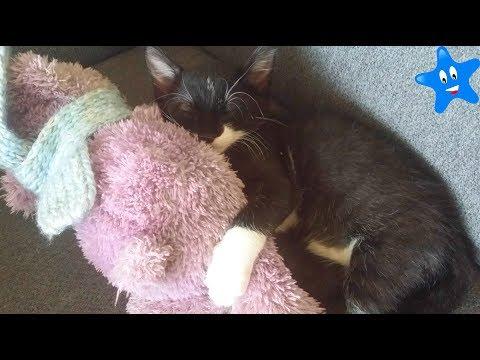 PAQUITO La rutina de noche de mi gatito Funny Cats Ksi Bebés