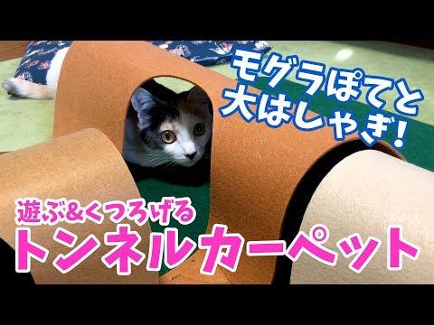 ぽてちゃんに猫用トンネルカーペットをプレゼントしてみたら大喜び!w