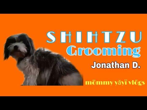 Shih tzu Grooming | Yayi's Vlog