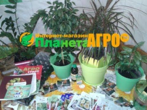 Семена с магазина Планета Агро г. Мелитополь Https://planeta-agro.com.ua/