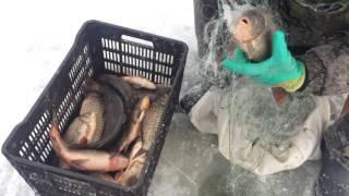 Рыбалка сетями 22.01.2017(, 2017-01-22T12:33:49.000Z)