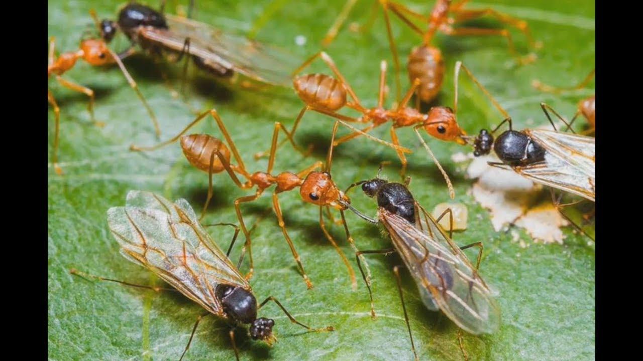 Bài 36. Bé học hình khối và các loại côn trùng