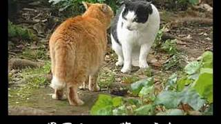 到底、本家のネコカラにはかないませんが 笑いほぼ無し、癒し系ネコカラ系です(?)