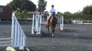 JC Equestrian Verdie Boy H, Clear Round at Port Royal EEC 5/08/09
