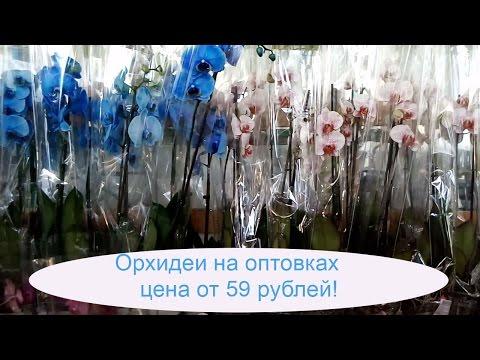 Закупка ОРХИДЕЙ в ОПТОВЫХ магазинах Цены от 59 рублей.